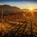 sunset by tomas.defranceschi