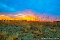 Grassy Dawn
