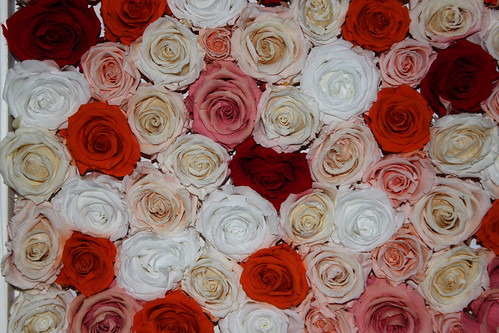 Red, pink and white roses.