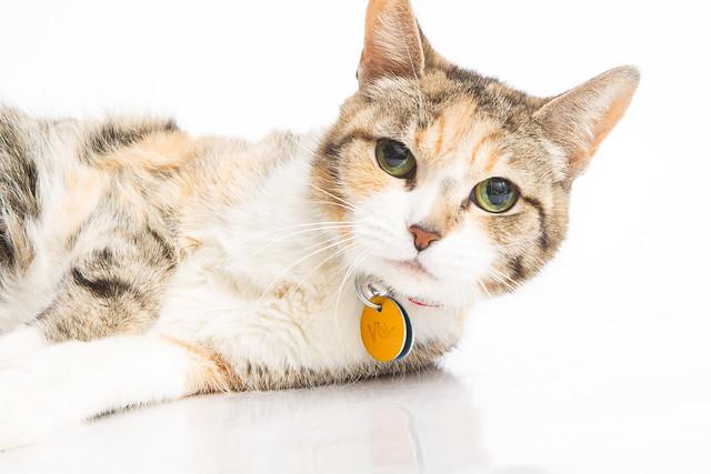 Otwawa Humane Cat