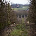 20150307 Elzc Molenbeek-Wersbeek