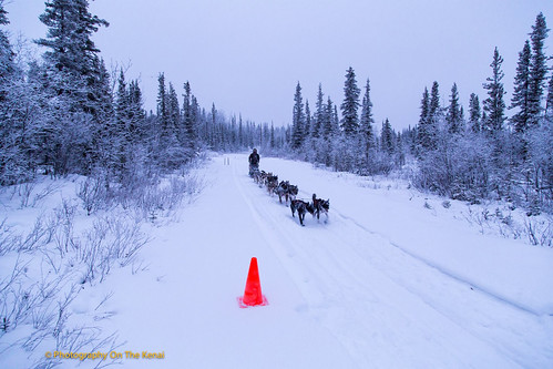 Musher Heidi Sutter and dog sled team approach the Sourdough checkpoint for a mandatory rest period during the Copper Basin 300 dog sled race.  Federal agency land management volunteers met in Glenallen, population less than 500, to lend support for event success. (Photo courtesy of Photography on the Kenai/Robert Parsons)