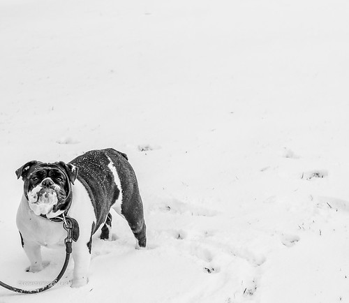 Texas snow pup