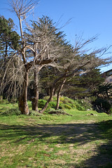 heritage trees