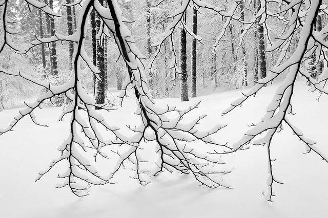 Elurra lausotuz / Acariciando la nieve