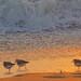 Fri, Feb 20, 2015 - sunrise on the beach, 09 by Ed Yourdon