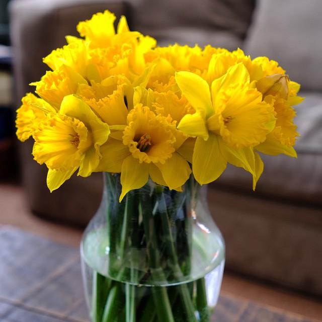 Daffodil Bouquet by Josh Lowensohn