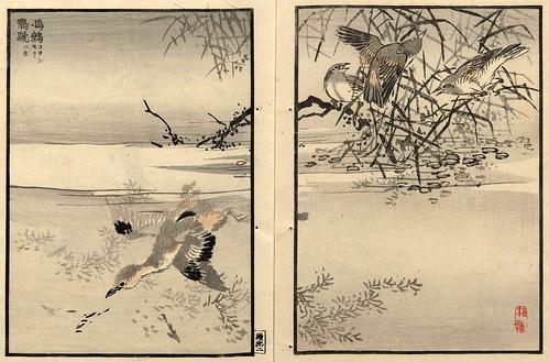 015-El álbum de los cien pajaros -Vol 2- Art-Thomas J. Watson Library
