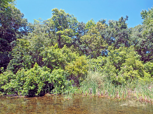 river stream water riverbank trees brush aquaticvegetation weekiwachee florida