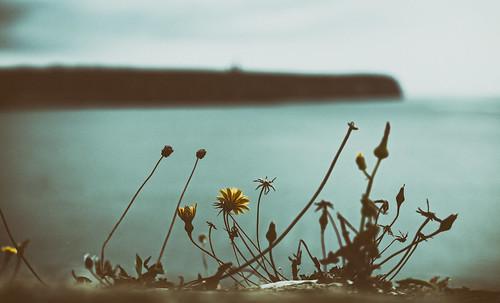 ocean sea cliff france beach weeds brittany europe dof bokeh bretagne breizh 2014 frnk canon6d