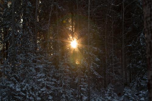 trees winter sun snow suomi finland starburst pyhtää kymenlaakso sunthroughtrees