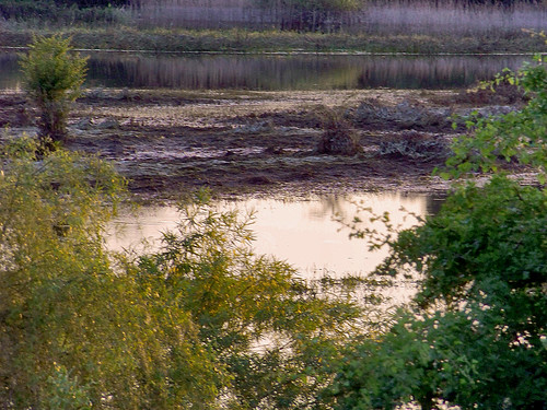 sunset grass landscape bush poland polska backwater trawa krajobraz krzew zmierzch światłocień rozlewisko coloursofwater chairscuro barwywody