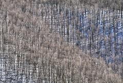Italy, snowy woods