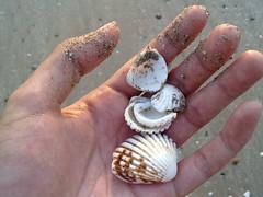 sea snail(0.0), invertebrate(0.0), food(0.0), conch(0.0), hand(1.0), animal(1.0), finger(1.0), seafood(1.0), seashell(1.0), cockle(1.0),