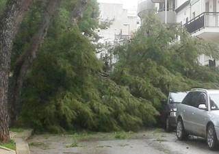 albero caduto 2 rutigliano