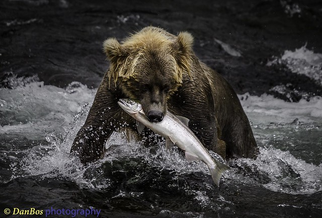 "Bear: ""Finally, I got it!!"""