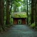 Togakushi shrine -戸隠神社奥社-【Explore】 by chikuma_riv