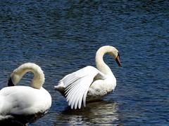 Wantagh Twin Lakes - North Lake (30)