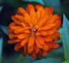 Botanic Gardnes-064
