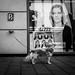 252/366 - Tiere / Animals by Boris Thaser