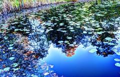 Walney Pond
