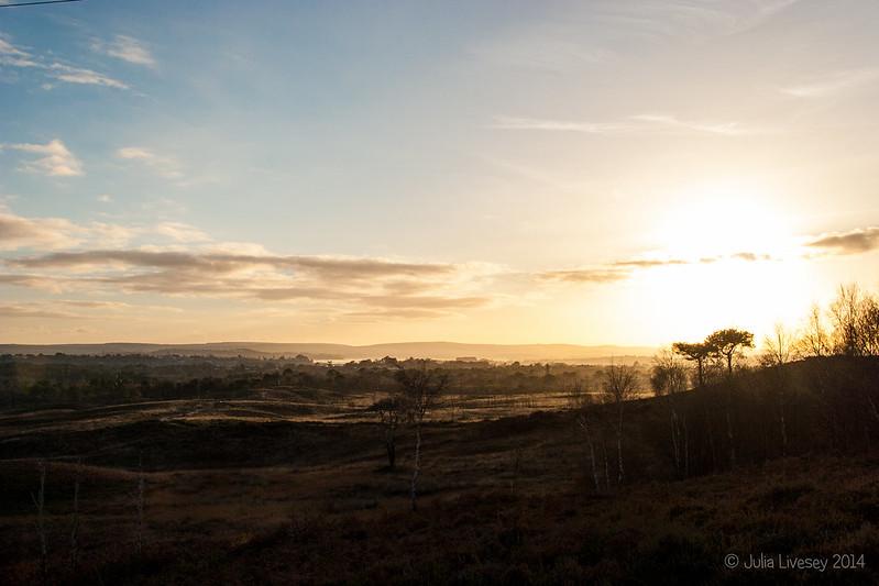 Late afternoon light over Upton Heath