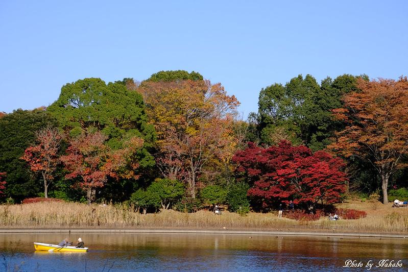@国営昭和記念公園 by Nakabo