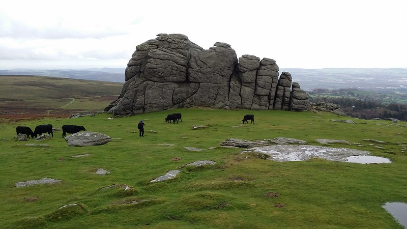 On Haytor #dartmoor #sh