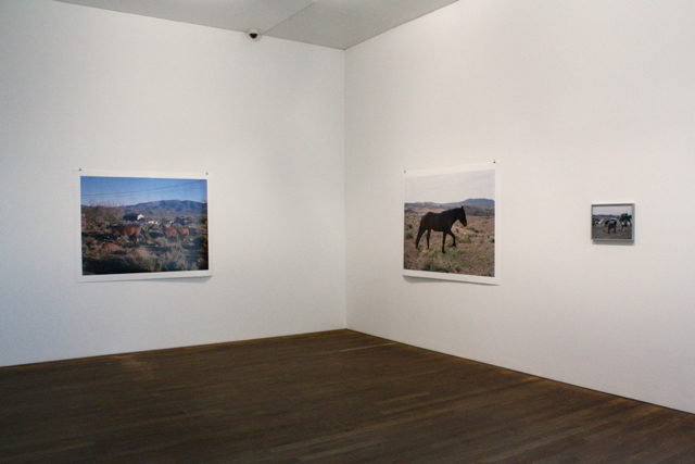 """Anima & The Widest Prairies"" exhibition at The Photographers Gallery, London"