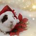 Merry Christmas! by gabitayuz