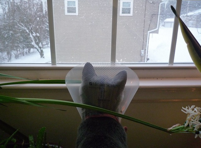 Little Conehead watches the snow