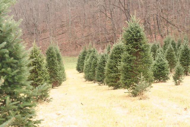 TreeHunting2014 (10)