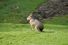 wallaby(0.0), squirrel(0.0), animal(1.0), hare(1.0), grass(1.0), pet(1.0), nature(1.0), fauna(1.0), meadow(1.0), rabits and hares(1.0), wildlife(1.0),
