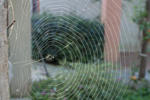 red sunrise costarica web amanecer araña cartago telaraña proyecto365