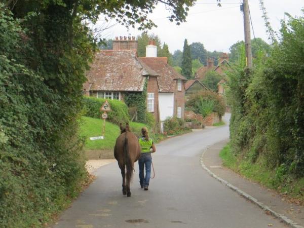 An English Mule