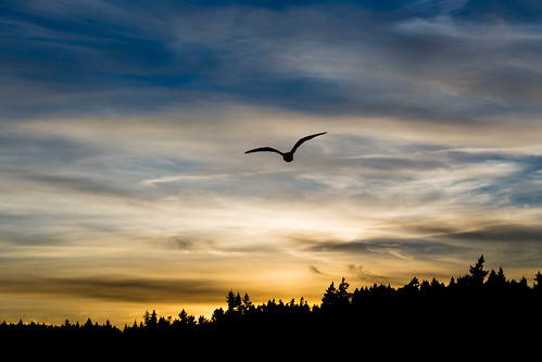winter sunset bird silhouette canon landscape washington unitedstates seagull silverdale canon70200f4l silverdalewaterfrontpark canonef70200mmf4lisusm canon6d canoneos6d