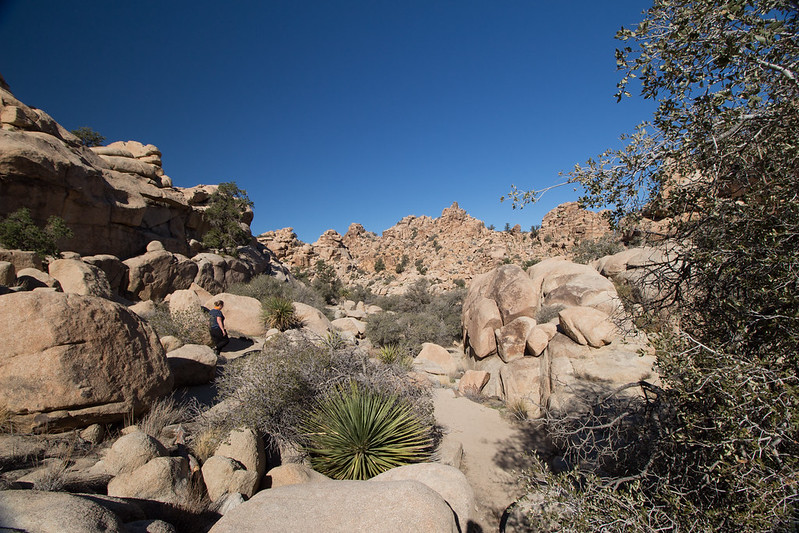walk, Joshua Tree NP, California, USA