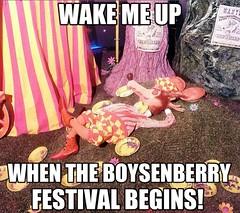 Boysenberrry Festival Anticipation - Courtesy of C…