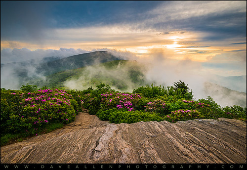 fog spring hiking tennessee northcarolina rhododendron springflowers appalachiantrail wnc westernnc roanmountain