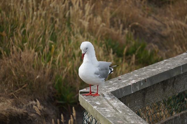 Awkward seagull