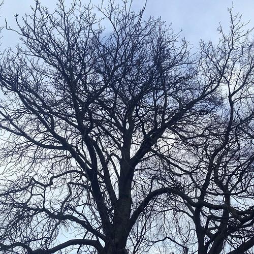 Blue skies #trees #sky #blueskiescoming