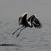 Grey Heron by Hari Charan Singh Photography