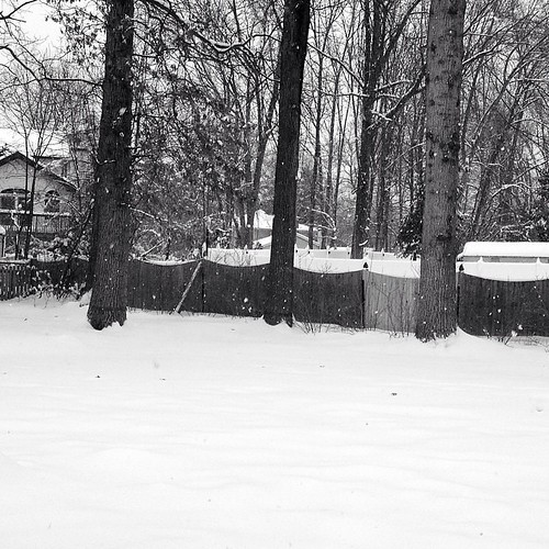 Feel like I'm living in a snow globe today!  #winter #365imperfect #snow #howlinguntilspring