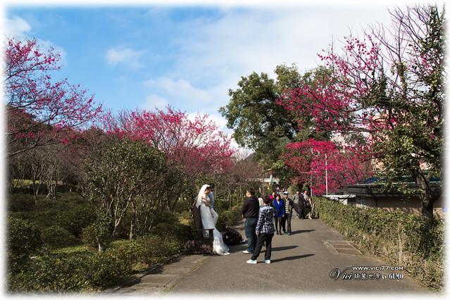 0202陽明山花卉002