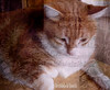 The Cat who dreams he was a musician: STRAUSS fils !