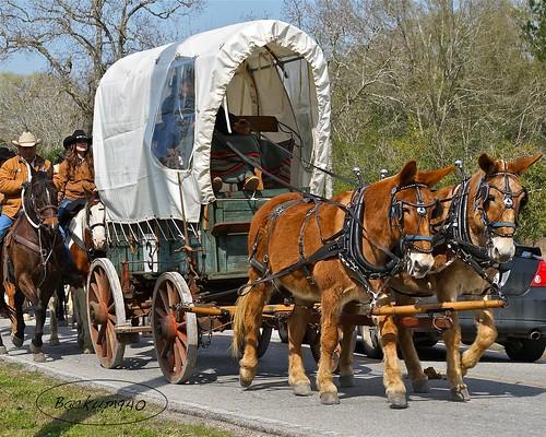Salt Grass Wagon !