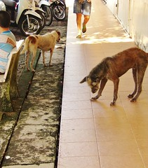 Wat Chalong, Thailand: Street Dogs