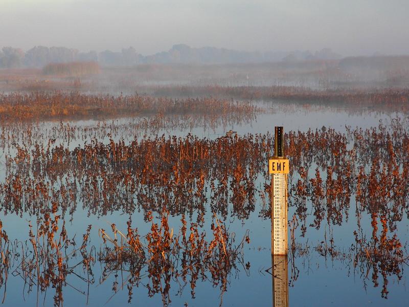 IMG_3320 Wetlands