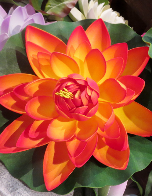 Colorful Lotus Decorations