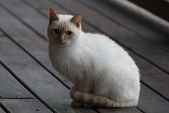Cabin Kitten